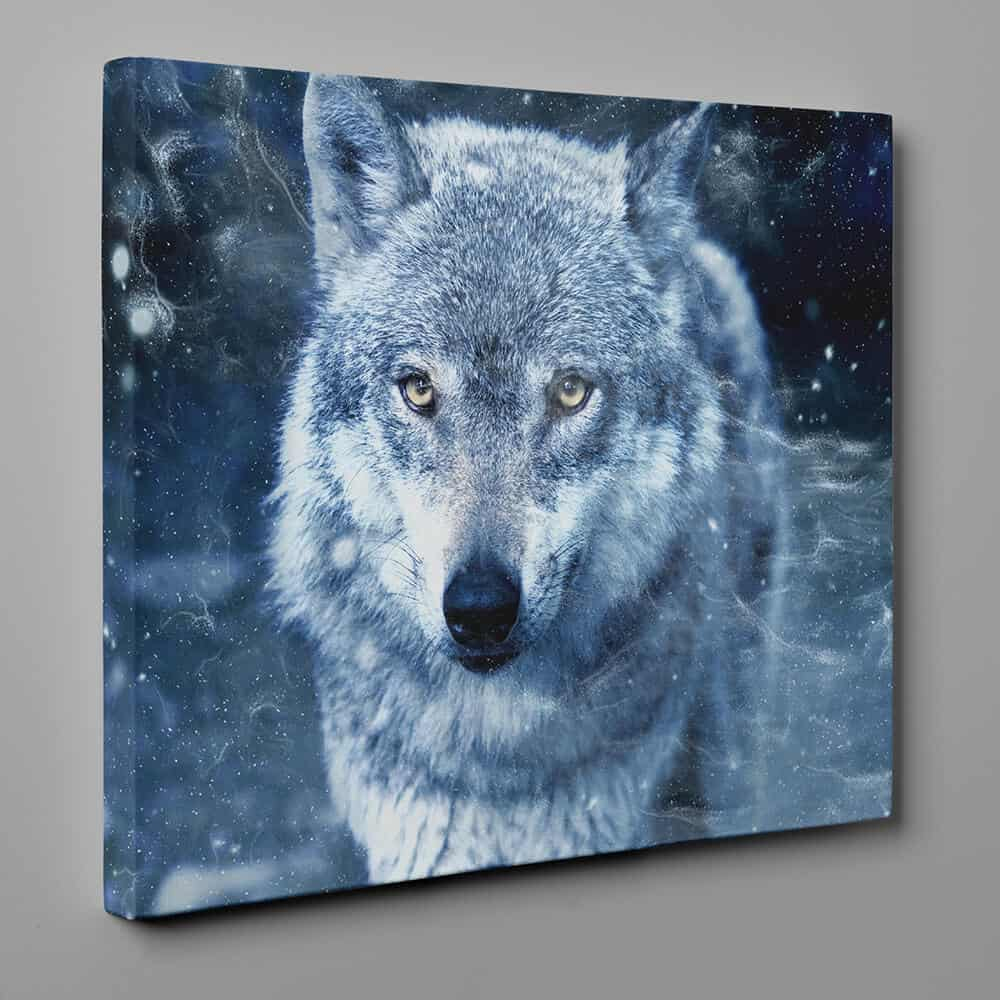 Gray Wolf With Amber Eyes Close Up Canvas Wall Art