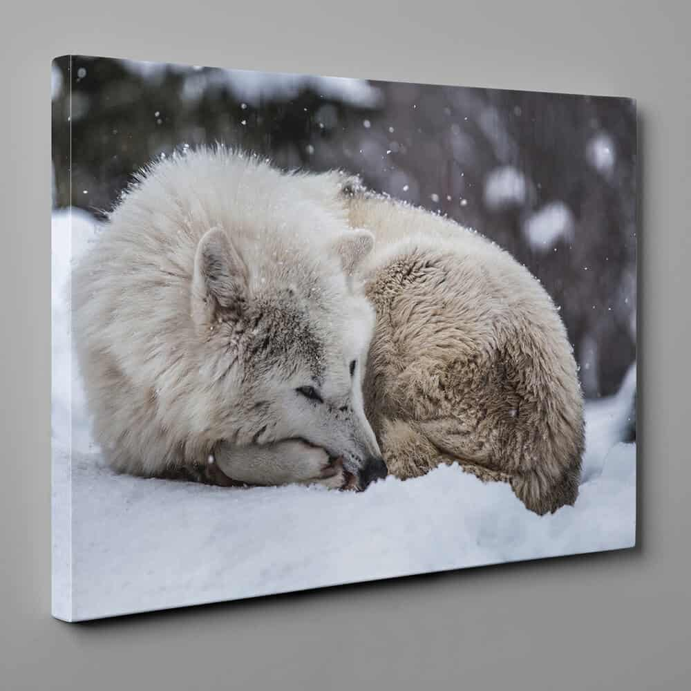 Sleeping Wolf In The Snow Canvas Wall Art