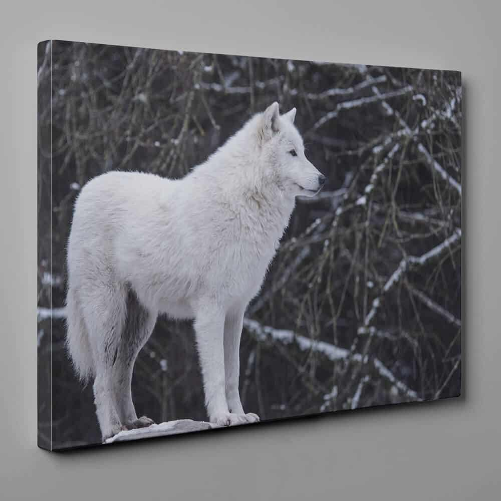 White Wolf In Winter Canvas Wall Art