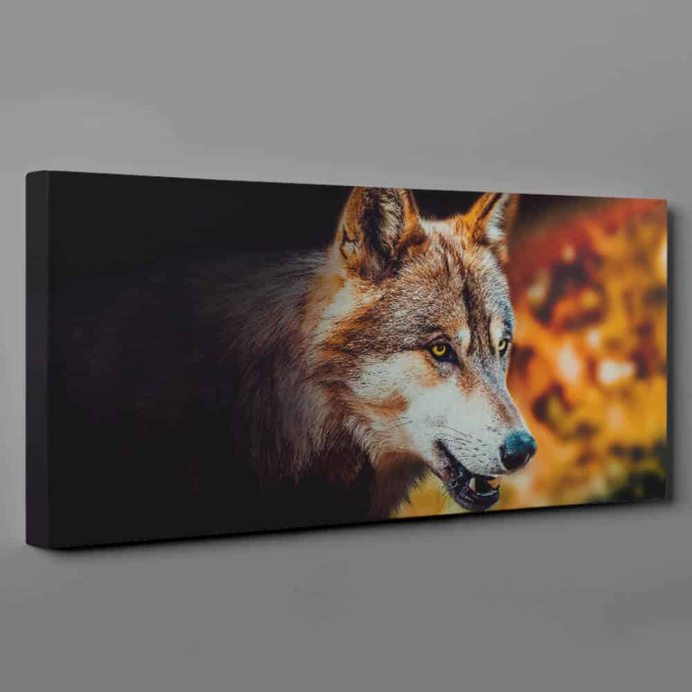 A Wolf With Amber Eyes In Autumn - Close Up Canvas Wall Art