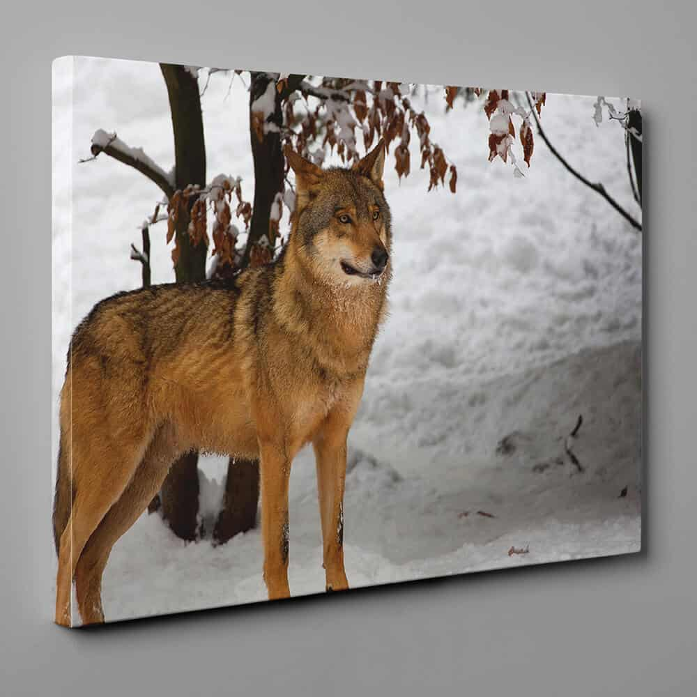 Wolf In The Winter Woods Canvas Wall Art