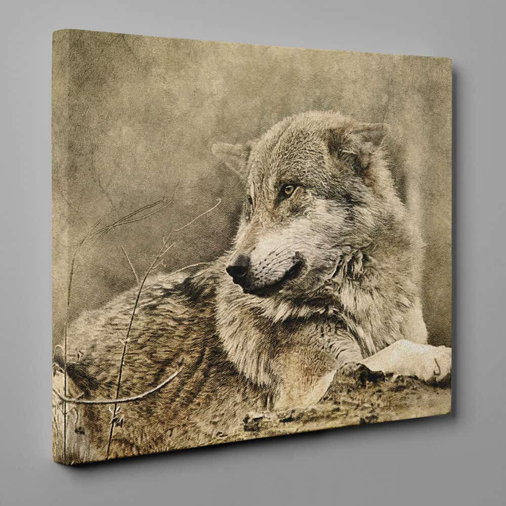 Wolf Lying Down In Forest - Sepia Canvas Wall Art