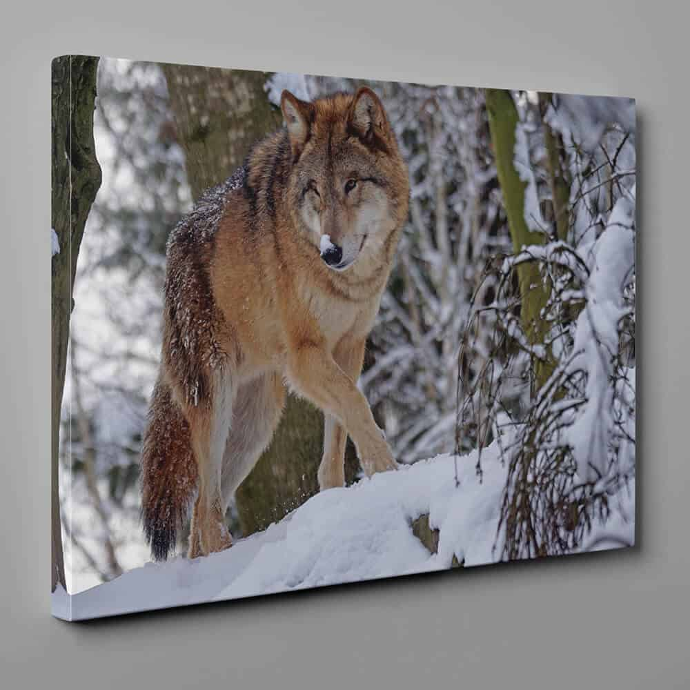 Wolf Walking In The Winter Woods Canvas Wall Art