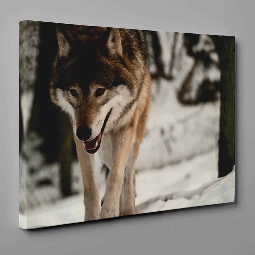 A Wolf Stalking Prey In The Winter Forest Canvas Wall Art