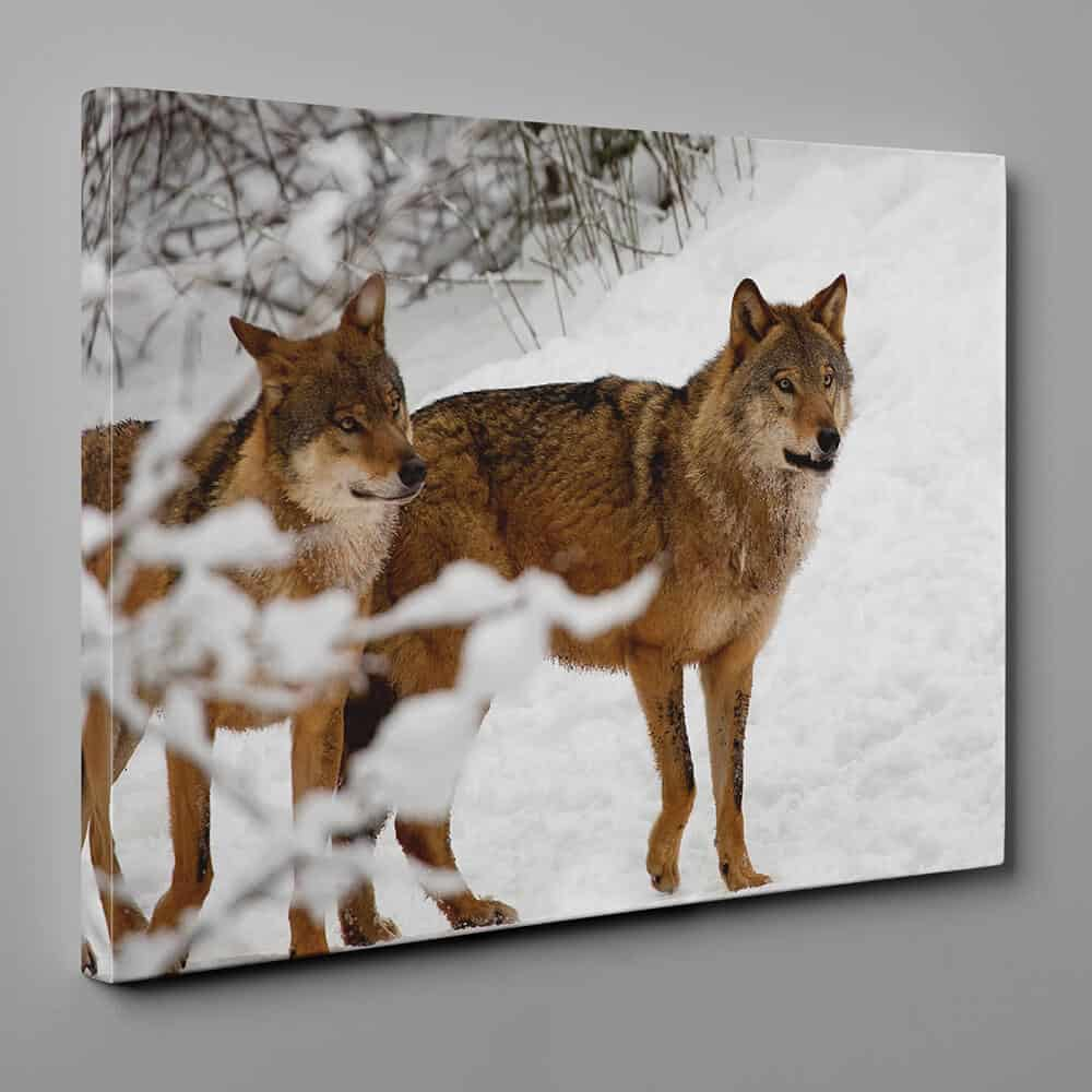 2 Brown Wolves In The Snow Canvas Wall Art