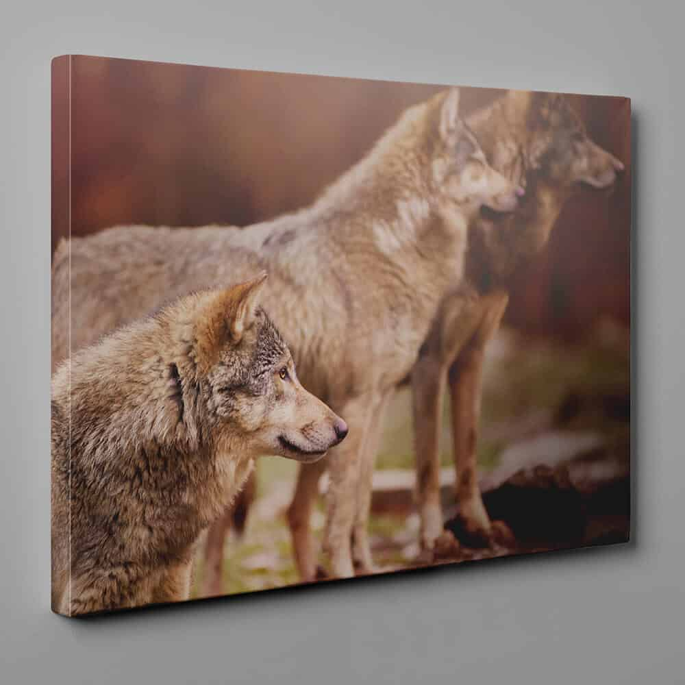 A Wolf Pack Gazing Into Space Canvas Wall Art
