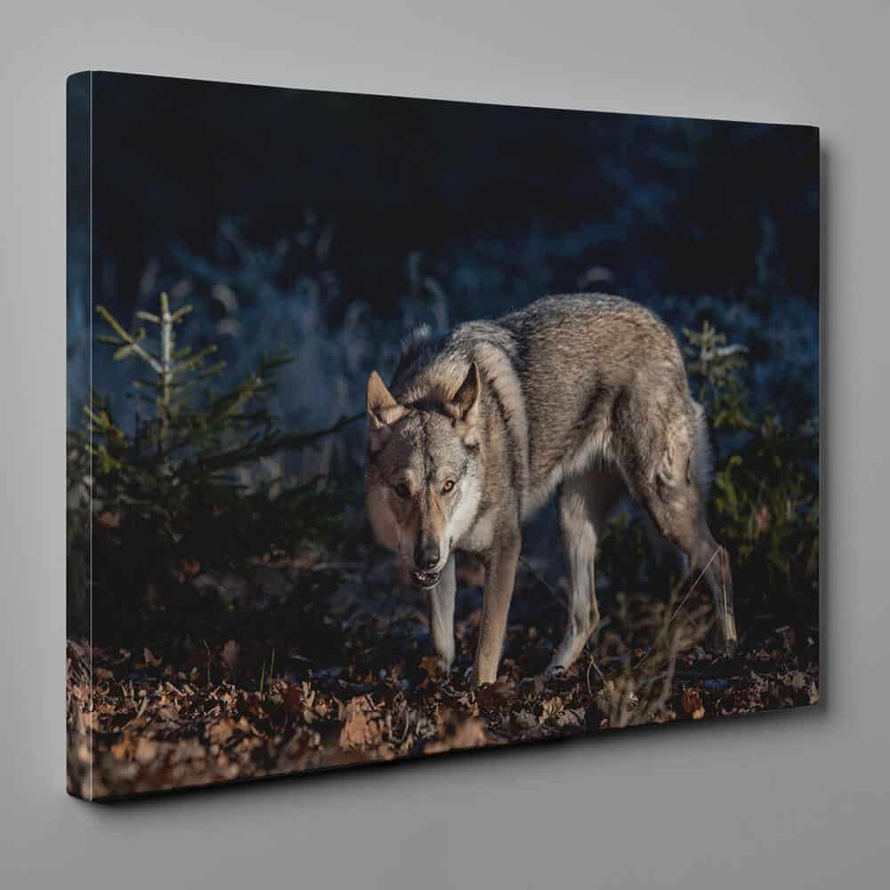 Wolf Lurking and Hunting In The Wood Canvas Wall Art