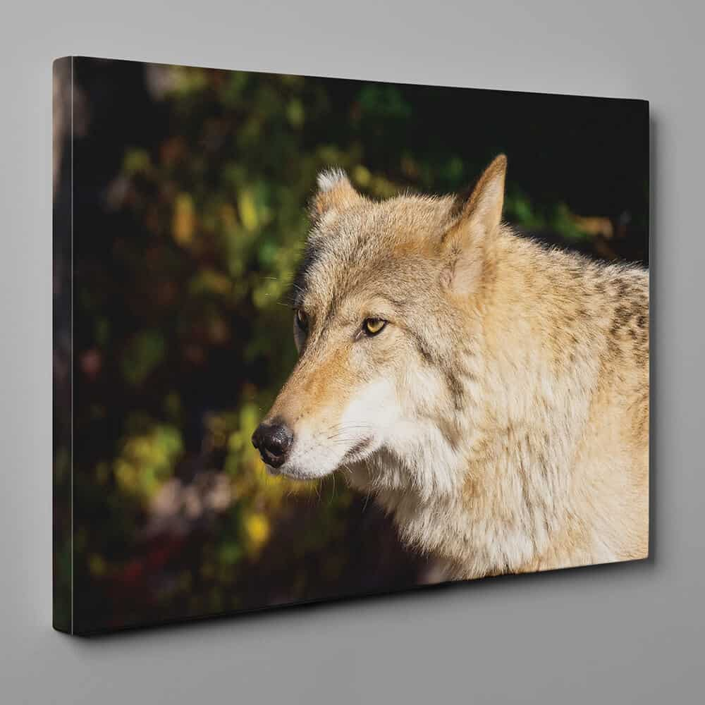 Timber Wolf Close Up Canvas Wall Art