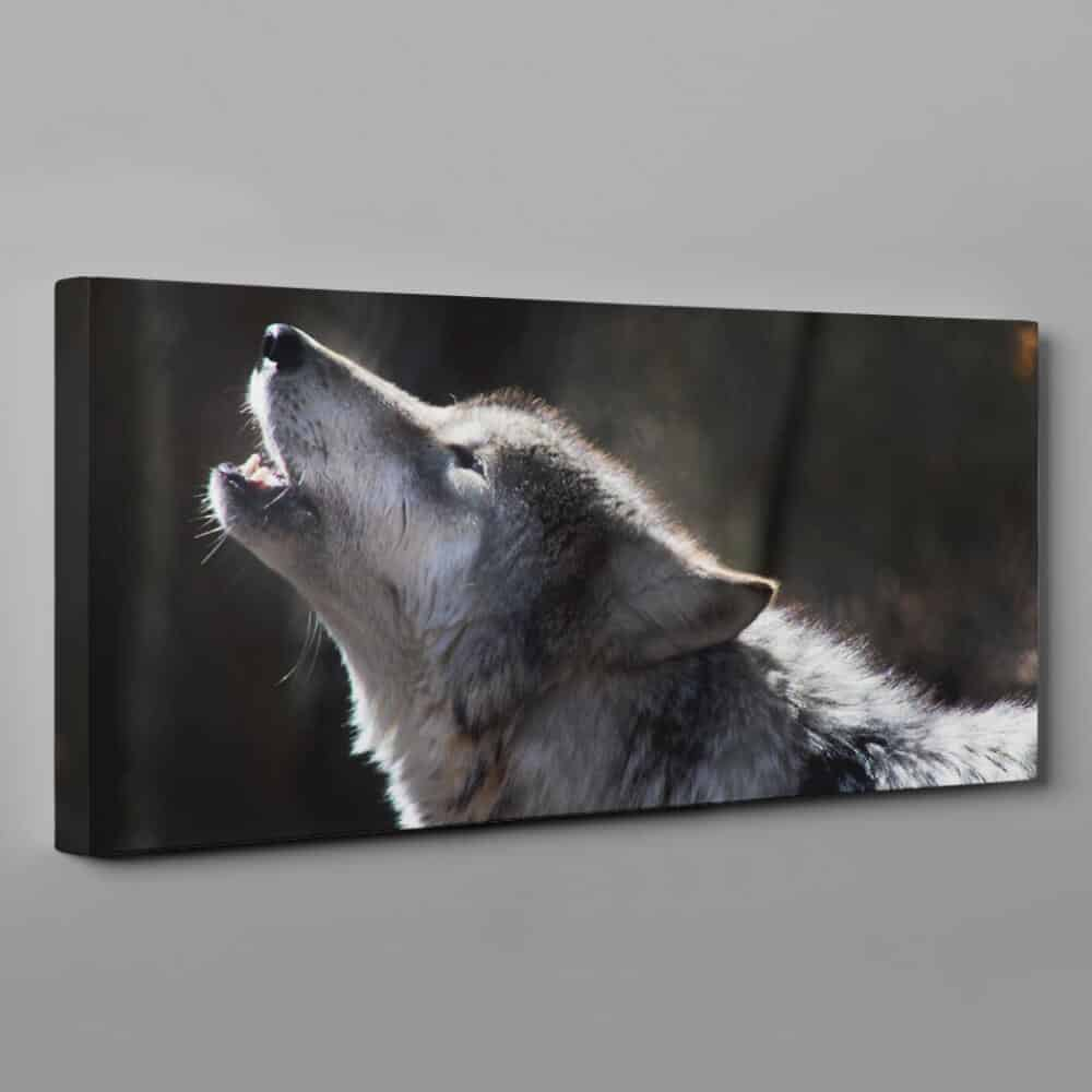 Gray Wolf Howling Canvas Wall Art