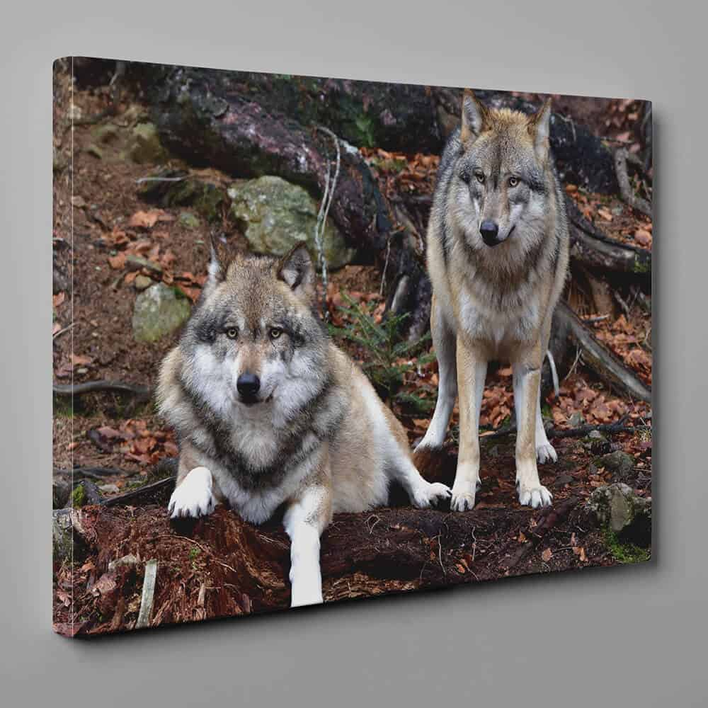 Gray Wolves Resting In The Woods Canvas Wall Art