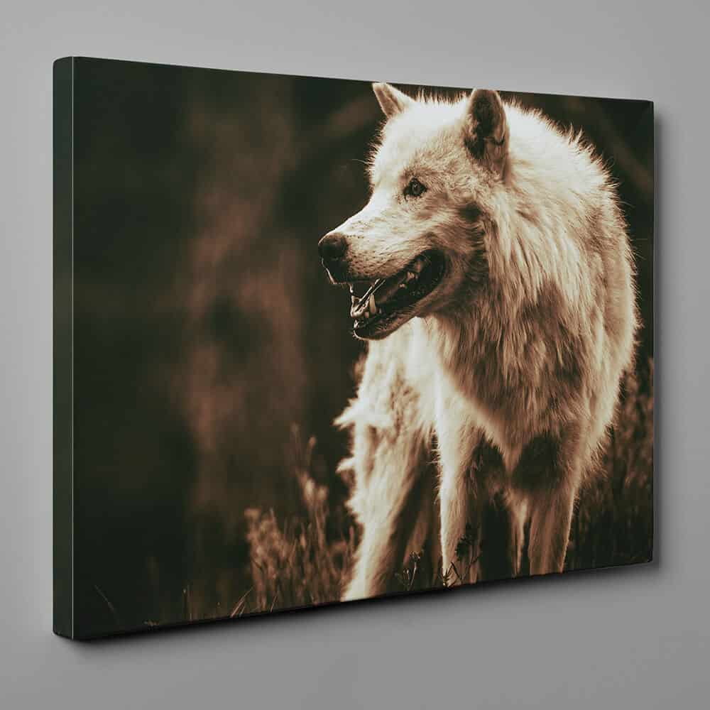 White Alpha Wolf - Sepia Canvas Wall Art