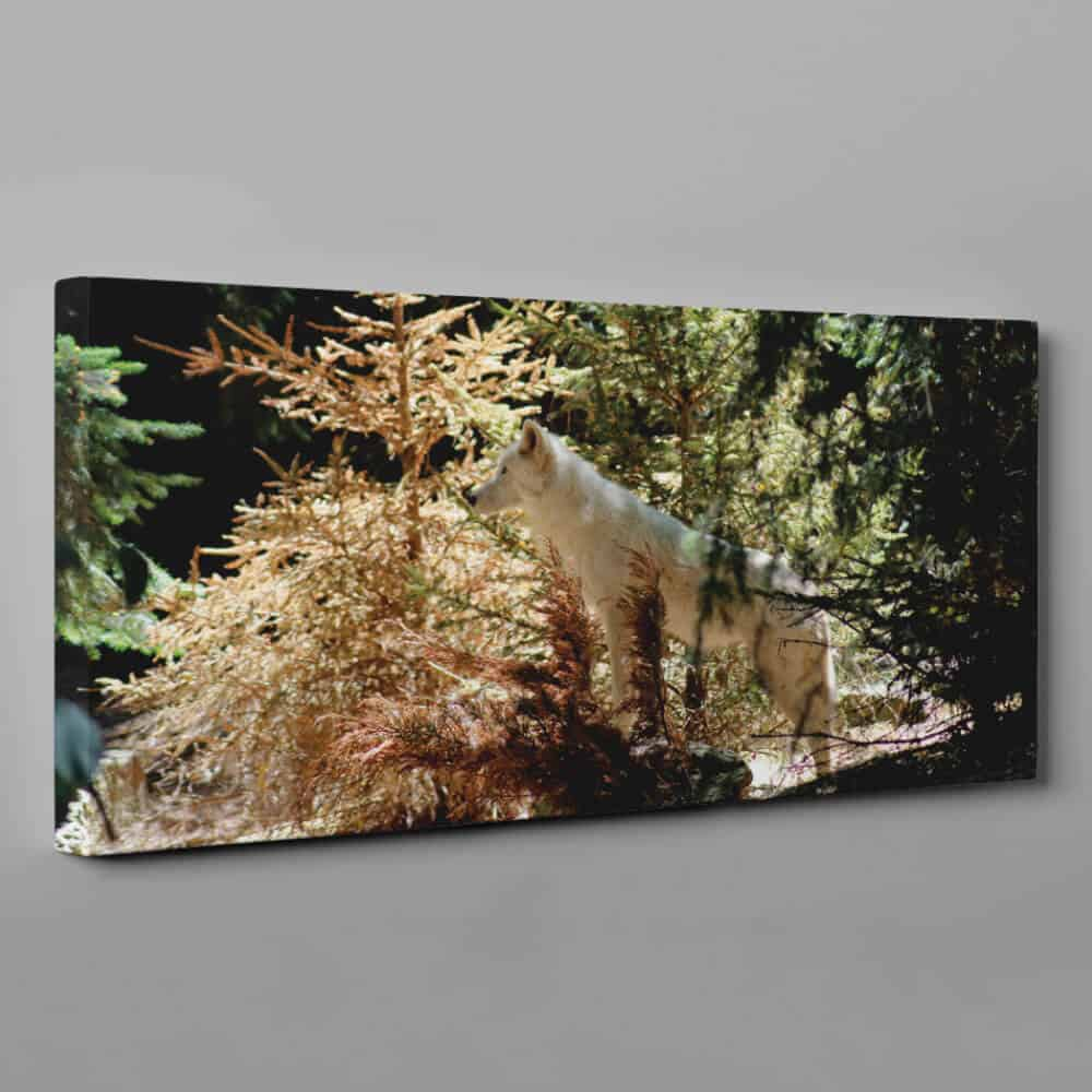 Arctic Wolf In Forest Canvas Wall Art